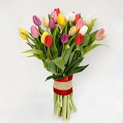 25 Vibrant Tulips Bunch