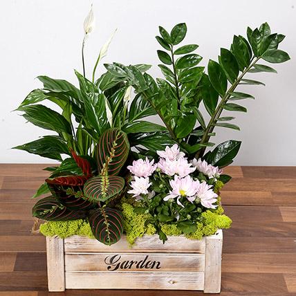 Beautiful Green Garden Box