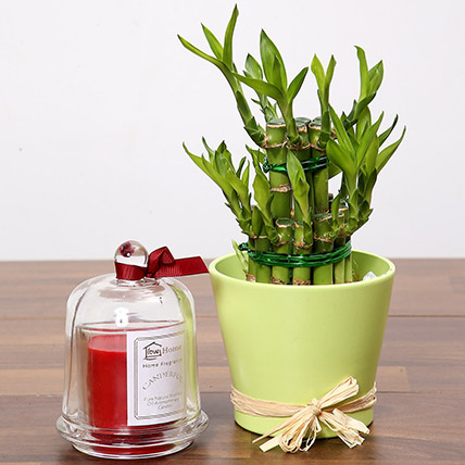 2 Layer Lucky Bamboo & Aroma Candle